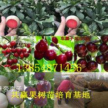 河南南陽核桃樹苗基地賣啥價格、果樹苗哪里有售