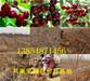 湖南岳阳大樱桃树苗出售价钱、2年大樱桃树苗哪里才卖