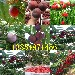 湖南娄底大樱桃树苗出售价钱、2年大樱桃树苗哪里才卖