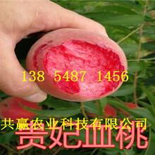 西藏昌都新品种桃树苗基地卖啥价格、桃树苗哪里有售图片