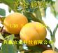 新疆库尔勒晚熟桃树苗基地卖啥价格、桃树苗哪里有售