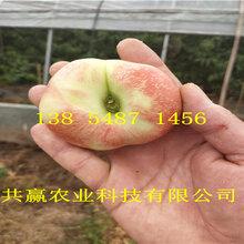 吉林延邊晚熟桃樹苗基地賣啥價格、桃樹苗哪里有售