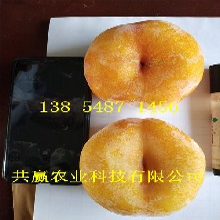 江西景德鎮雪桃樹苗基地賣啥價格、桃樹苗哪里有售