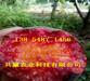 挂果黄桃树苗育苗基地、桃树苗哪里有出售的