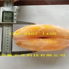 重慶涪陵黃金密桃樹苗基地賣啥價格、桃樹苗哪里有售