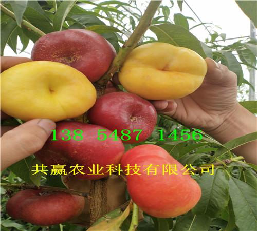 宁夏吴忠附近6月成熟桃苗多少钱卖