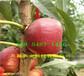 內蒙古呼和浩特附近雪桃樹苗多少錢賣