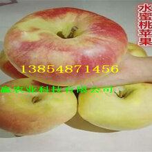 江苏南通苹果树哪里卖、短枝苹果树苗要卖多少钱一棵图片