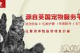 猫真菌皮肤病怎么办_爪爪博士宠物护理