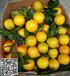 红江橙官方网,红橙生产基地