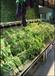西藏連鎖超市蔬菜架冷柜風幕柜專用噴霧機