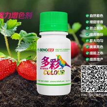 倍诺多彩营养剂,增甜效果好,膨大果实,防裂增产