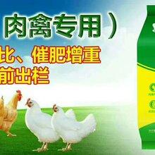 肉鸭吃什么长的快,肉鸭催肥秘方,肉鸭催肥药,肉鸭催肥绝招