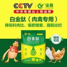 肉鸭催肥白金肽,肉鸭中后期催肥,怎么给鸭子催肥增重,肉鸭催肥药,后期肉鸭增重方法