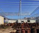 石碣鎮更換養殖棚防水施工工藝流程圖片
