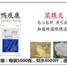 鸭鹅浆膜炎绿-鸢鸭疫康图片