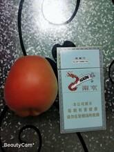 新疆沙金紅杏哪里有賣圖片