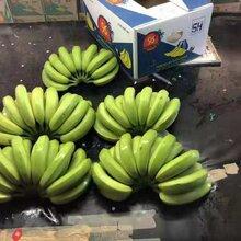 菲律賓進口香蕉整柜批發價格優秀圖片