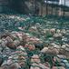 六角石籠網-包塑石籠網-生產六角石籠網廠家