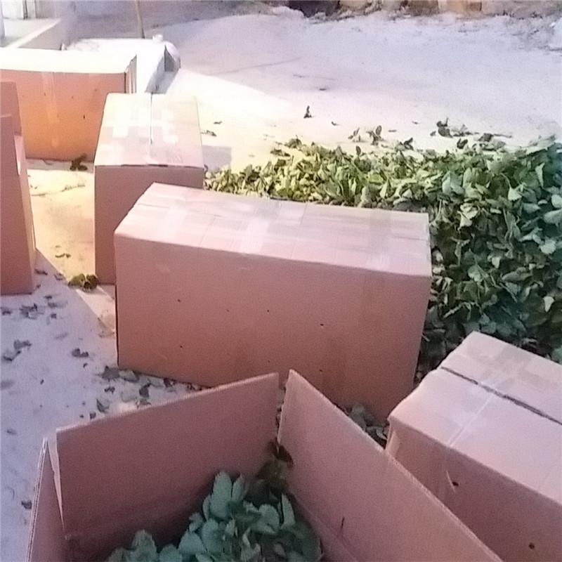 妙香草莓苗价格红颜草莓苗