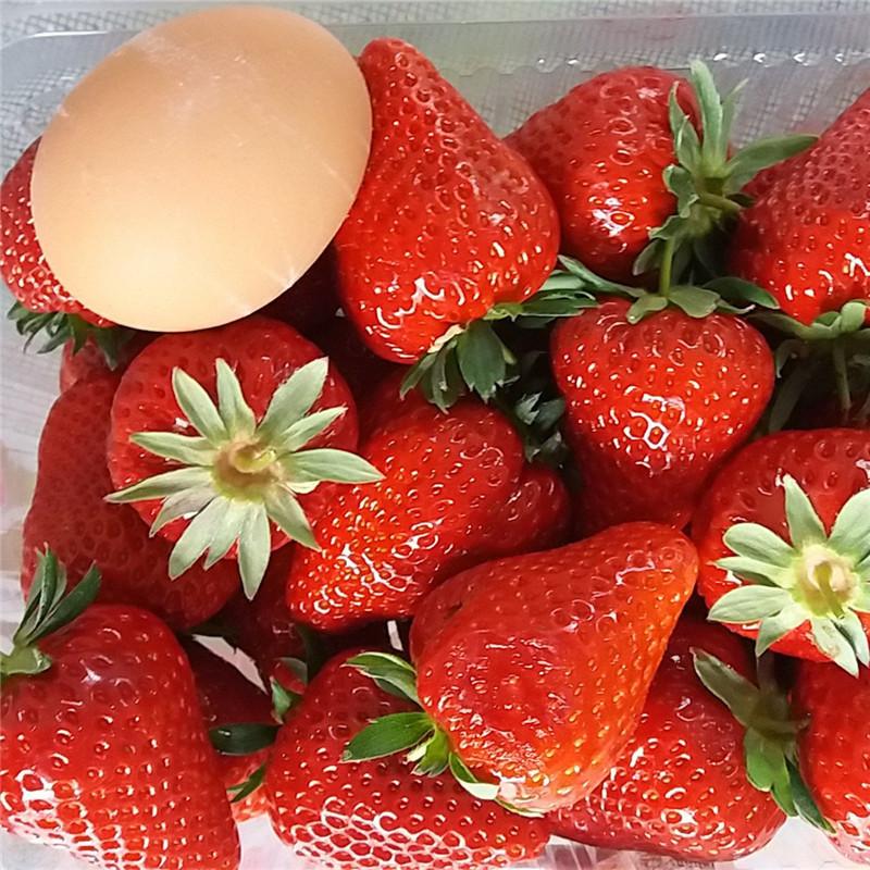 妙香7号草莓苗-开元苗木公主草莓苗