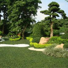 承接白云越秀園林綠化,花草樹木種植,除草殺蟲養護等