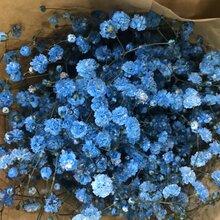 广州鲜花批发市场哪里比较便宜