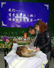 河北石家莊寵物火化狗狗安葬圖片