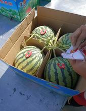 西瓜產地批發西瓜基地供應西瓜市場價格行情河南商丘西瓜圖片