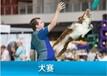 2019中國太原寵物產業博覽會暨2019年CKU山西全犬種國家冠軍展