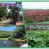 深圳最特色的乐湖生态园自然风光团建野炊休闲一日游