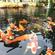 锦鲤鱼水循环