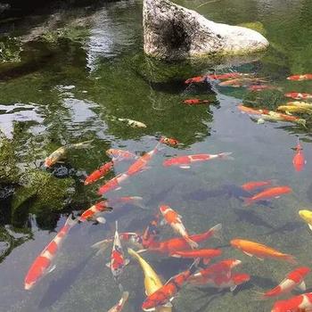 攀枝花假山鱼池水处理