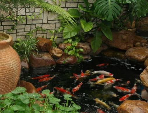 濮阳杰蒙尼鱼池自制沙缸过滤