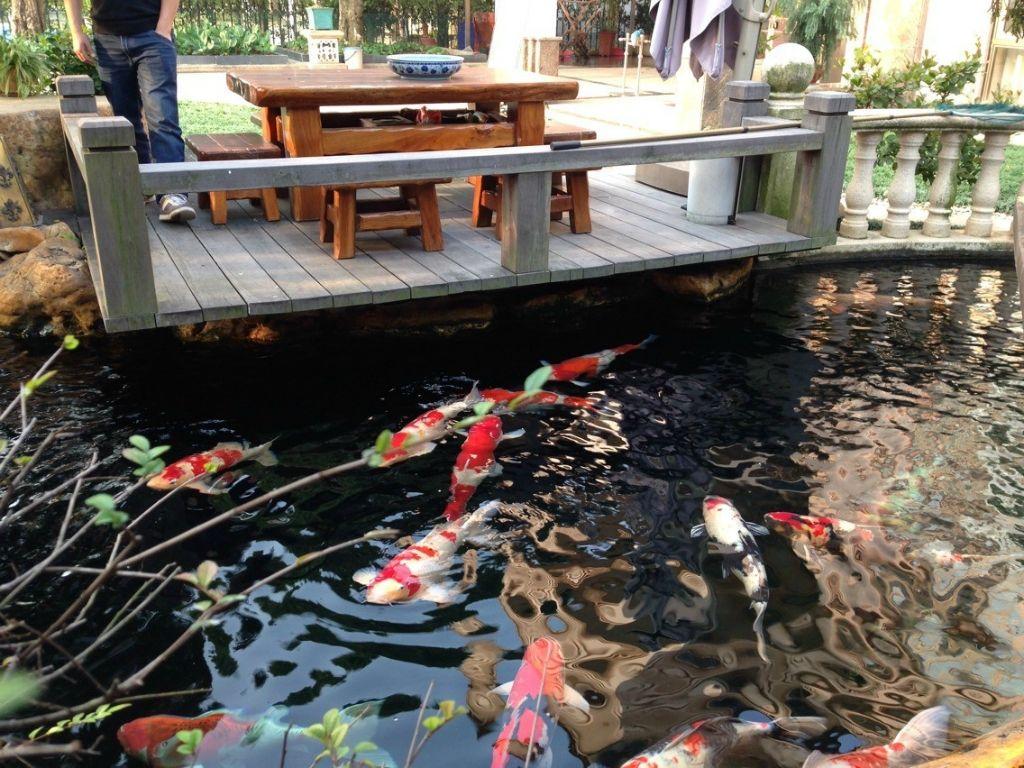 湘西杰蒙尼室外魚池水生植物過濾