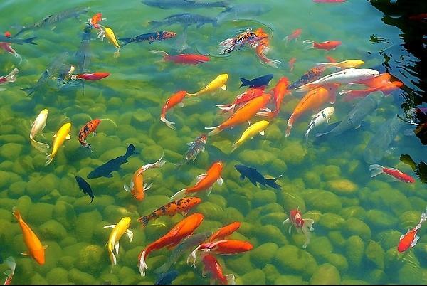 信陽杰蒙尼觀賞魚魚池水質過濾