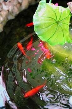 淄博观赏鱼池水净化哪家好杰蒙尼过滤系统