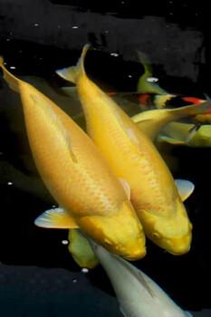 保定景区鱼池水净化性价比最高杰蒙尼过滤器
