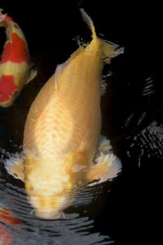 荆州假山鱼池水循环哪家专业杰蒙尼过滤器