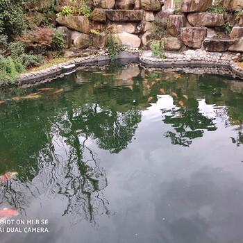 荆门阳台私人鱼池净化器性价比最高杰蒙尼过滤器