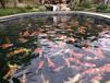 宿遷杰蒙尼智能控制魚池過濾器觀賞魚池水過濾