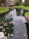 景觀魚池過濾器圖