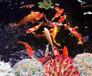 日照杰蒙尼高檔會所觀賞魚池水過濾
