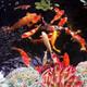 錦鯉魚池水凈化圖