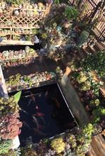 南通杰蒙尼魚池過濾器庭院魚池水循環圖片