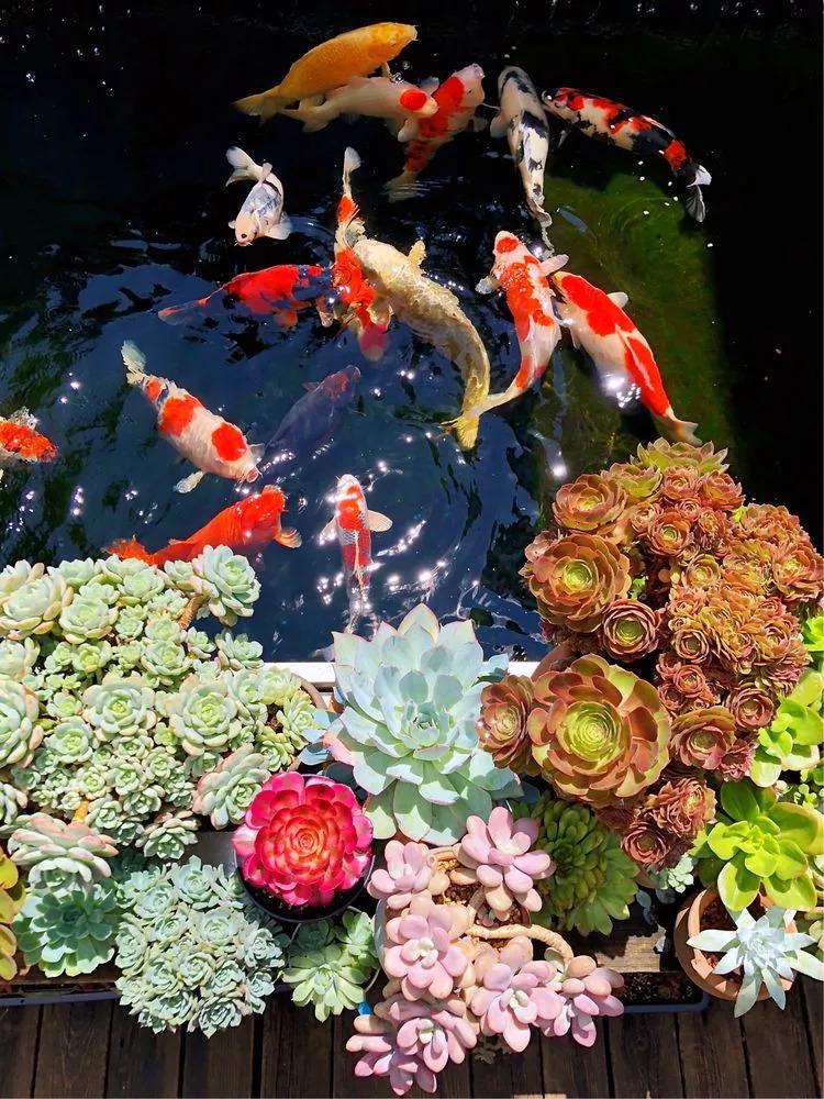 湘西杰蒙尼錦鯉魚池過濾系統