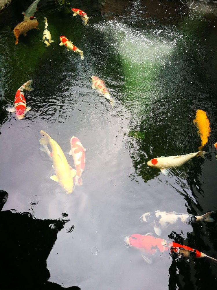 婁底杰蒙尼魚池凈化過濾器