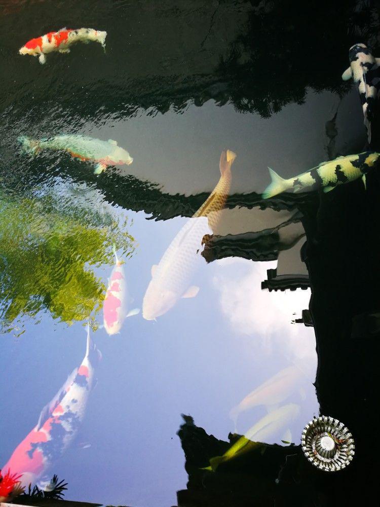 信陽杰蒙尼室外魚池過濾系統