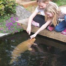 无锡杰蒙尼鱼池过滤器不锈钢鱼池水净化图片