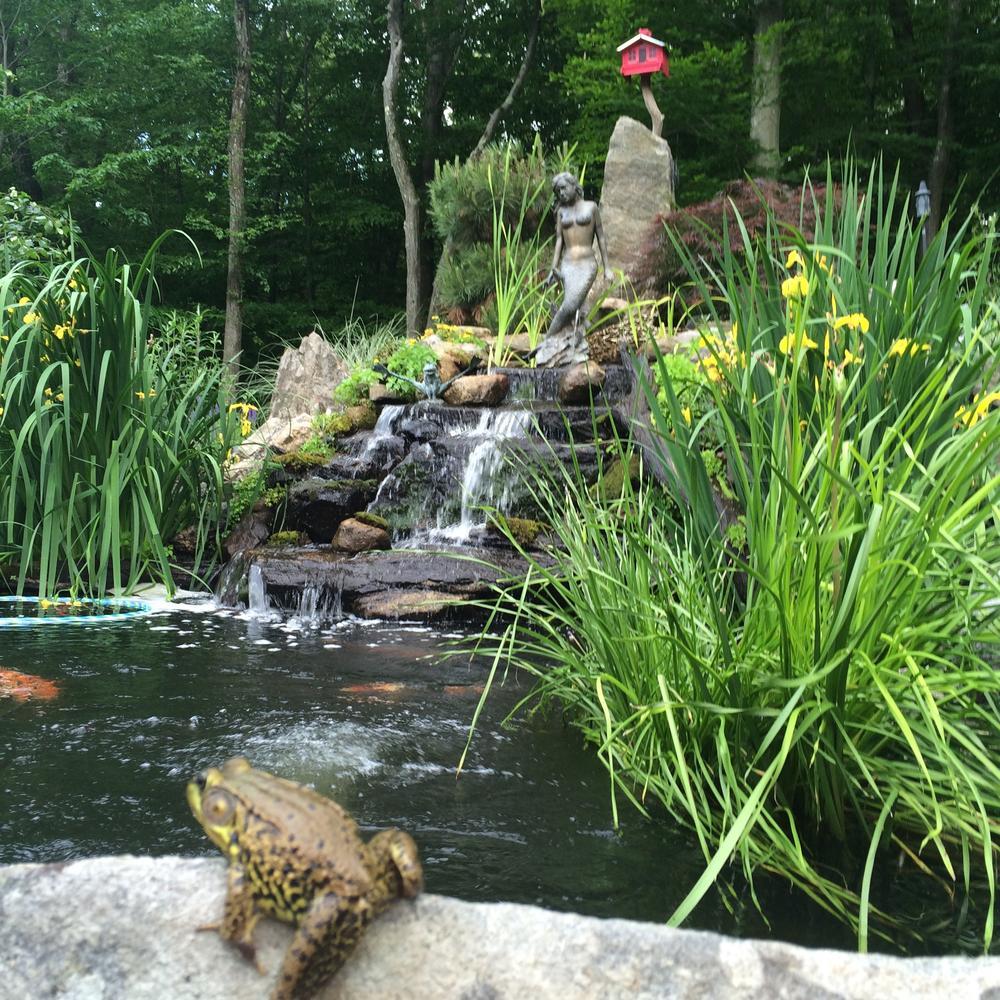 湘西杰蒙尼自制庭院魚池過濾系統